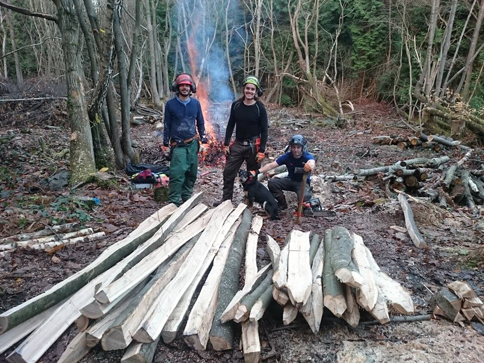 Coppice Harvesting Efficiency