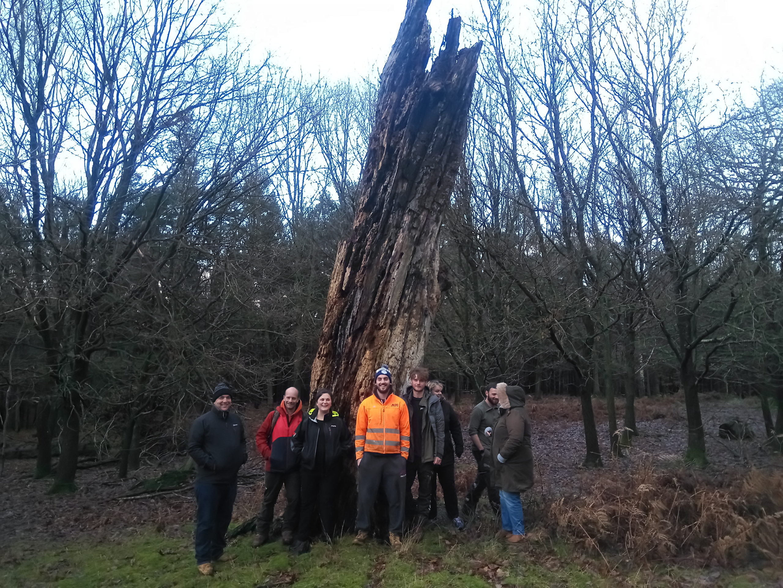 Basic Tree Inspection course  - Knole Park
