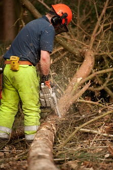 Combination Arborist Tree Surgery Courses Kingswood Training